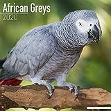 African Grey Calendar - African Grey Parrot Calendar - Parrot Calendar - Calendars 2019 - 2020 Wall Calendars - Bird Calendars - Monthly Wall Calendar by Avonside