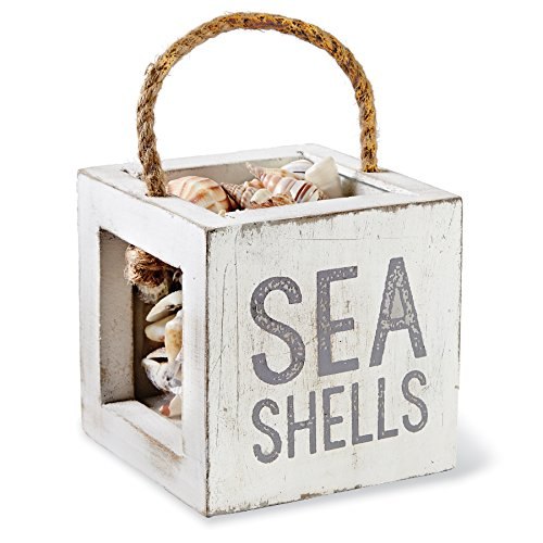 Mud Pie 4865031S Mango Wood Treasure Box, Sea Shells (Pie Display Case)