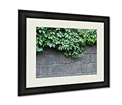 Ashley Framed Prints, Green Leaves Of Ivy Virginia Creeper On Bare Boards Of A Wooden Fence, Black, 24x30 Art