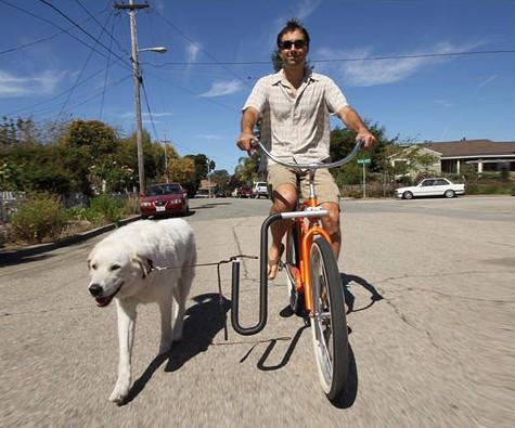 Moved By Bikes MBB Dog Runner