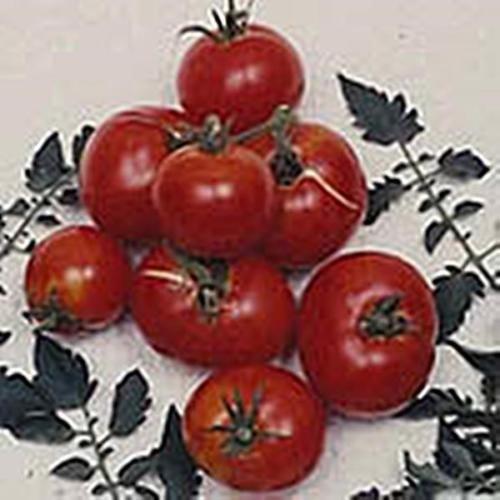 creole-tomato-seed