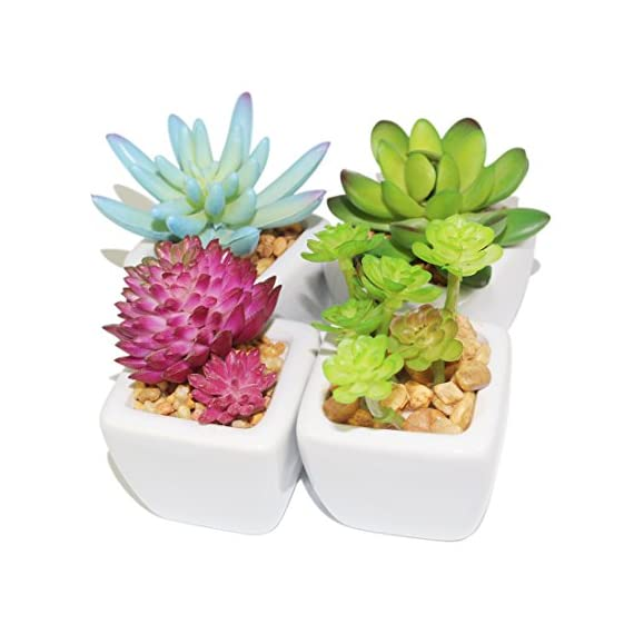 "Myartte Home Decor Artificial Shrubs-Set of 4 Different Artificial Succulent Plant for Home Decoration Office Decoration… - Cute artificial succulent plants set with real rocks, looks great and works with all kinds of home decor Home decor Scene decoration,Perfect for decorating any space in your home or office When the first rays of the morning sun through the window, you see them cheering, they seem to grow up day by day,but they are still the same size as your first sight as: 2.75""W x 3.25""H for each. Pot size: Top width 1.97"",Bottom width:1.57"",Height:1.77"".Please pay attention to the size,it is very small,but quite cute - living-room-decor, living-room, home-decor - 51GZGWy7QxL. SS570  -"