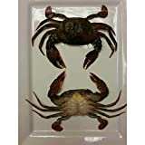 Harbor Seafood Soft Shell Raw Sandwich Style Crab, 2. 31 Pound -- 4 per case.