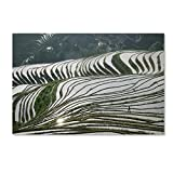 Rice Fields by Robert Harding Picture Library, 16x24-Inch Canvas Wall Art