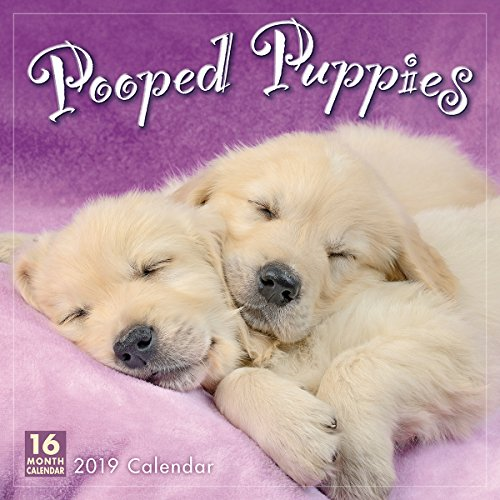 Pooped Puppies 2019 Wall Calendar