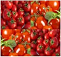 150 LARGE RED CHERRY GRAPE Tomato Seeds HEIRLOOM Sweet, juicy, bite size ~ 1.25""