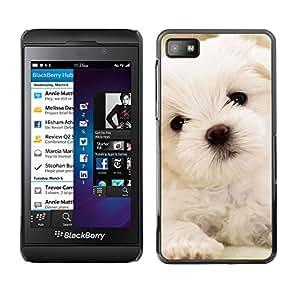 Maltese Dog Puppy White Soft - Metal de aluminio y de plástico duro Caja del teléfono - Negro - Blackberry Z10