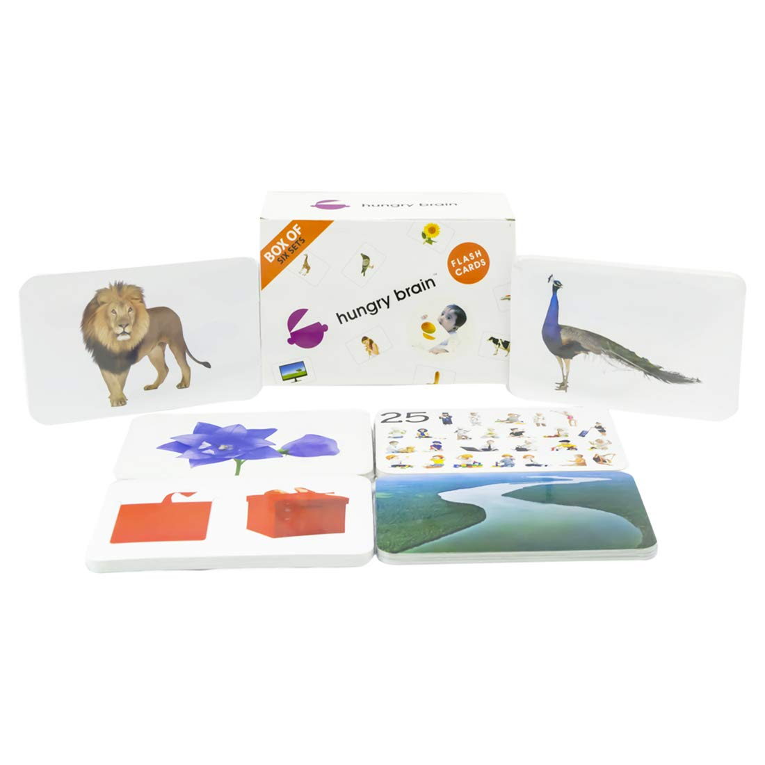 Hungry Brain Box of 6 ''B Flash Cards- Easy & Fun Way of Learning-Gift Box for Kids by hungry brain