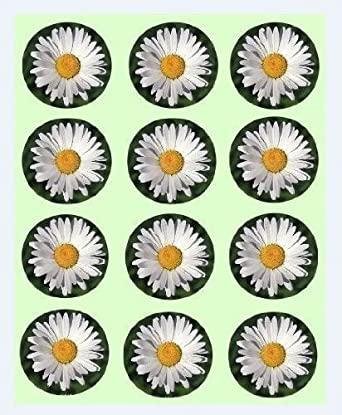 12x daisy design rice paper fairy cup cake 40mm toppers pre cut 12x daisy design rice paper fairy cup cake 40mm toppers pre cut decoration flowers mightylinksfo