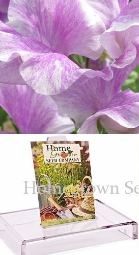 (Homegrown Packet Sweet Pea Seeds, 75 Seeds, Lavender Stripe Flush Sweet Pea)