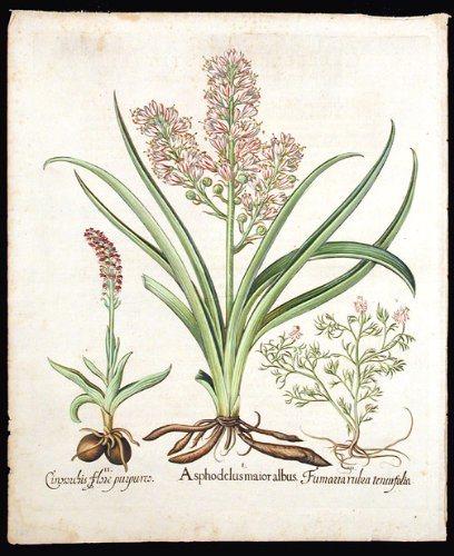 Asphodel; Spotted orchid; Spiked fumitroy