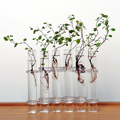 Decor Bedroom M and F Clear 6 Tubes Shape Flower Glass Vase Bottle For Flower Plant DIY Home Decoration Terrarium Hydroponic Container (Drawer Dresser Tower Six)