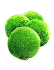 4 LUFFY Marimo Moss Balls - Aesthetically Beautiful & Create ...