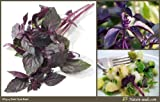 Nature Seeds Dark Opal Basil Purple Basilicum Herb 200 Gardening Seeds