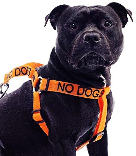 NO Dogs (no Bueno con Otros Perros), arnés para Perro con código ...