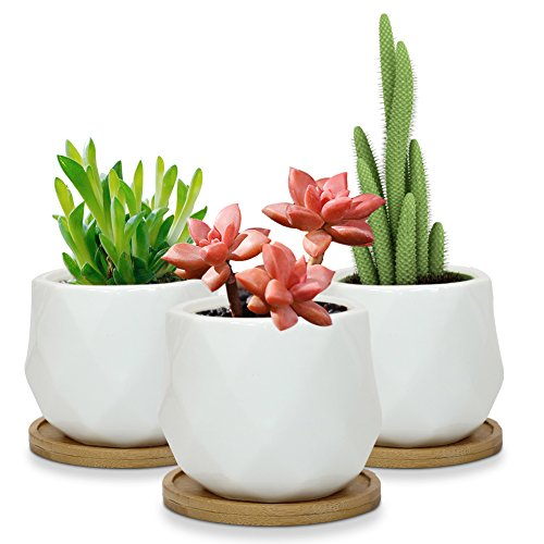 Planter Tray - Sqowl 3 Piece 3.9 Inch White Ceramic Succulent Planter Pot Modern Cute Small Cactus Herb Flower Planters Set with Bamboo Tray Indoor or Outdoor