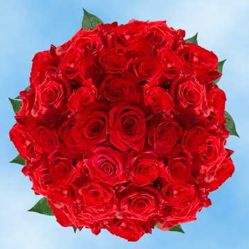 Cut Red Roses - Freedom Red Roses - Fresh Flowers Wholesale Express Delivery (200 Red Roses)