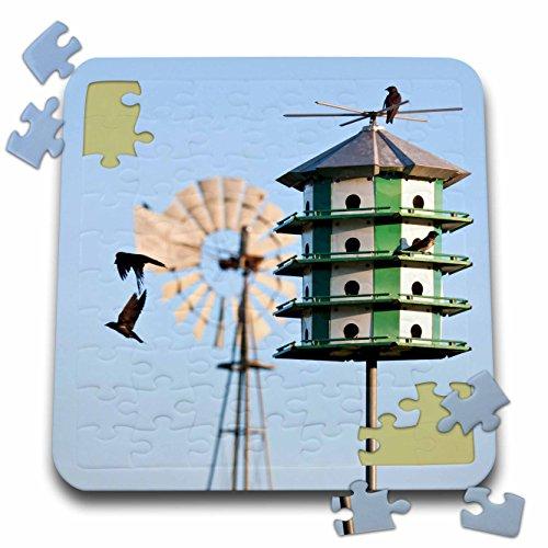 (Danita Delimont - Larry Ditto - Birds - Purple Martin, Progne subis, at nest box near windmill, Texas, USA - 10x10 Inch Puzzle (pzl_191303_2))
