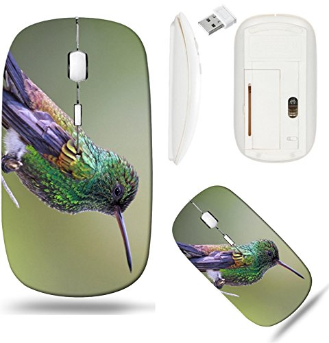 Liili Wireless Mouse White Base Travel 2.4G Wireless Mice with USB Receiver, Click with 1000 DPI for notebook, pc, laptop, computer, mac book IMAGE ID: 13864646 Copper rumped Hummingbird Amazilia toba