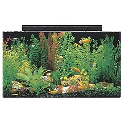 50 gallon fish tank for One gallon fish tank
