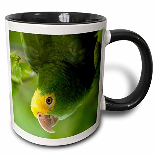 3dRose (mug_85626_4) Yellow-headed Amazon Parrot, Tropical bird, Belize - SA02 POX0118 - Pete Oxford - Two Tone Black Mug, (Belize Mug)