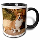 3dRose 140281_4''Purebred Cardigan Welsh Corgi Dog On Rock' Mug, 11 oz, Black