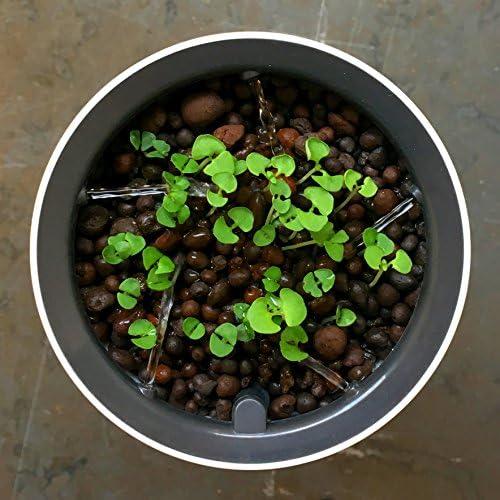 Botanium Unidad de Cultivo Automático de Alimentos Humo Blanco ...