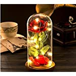 DDSKY-Beauty-and-The-Beast-Silk-Rose-and-Led-Light-with-Fallen-Petals-in-a-Glass-Dome-on-a-Wooden-Base-Artificial-Flowers-Full-Kit-Creative-DIY-Gift-for-Christmas-Valentines-Day-Red