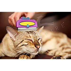 Pets Empire Short Hair DeShedding Tool for Small Cats