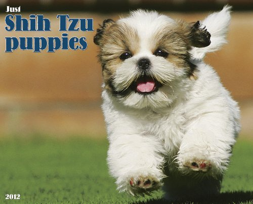 Shih Tzu Puppies 2012 Calendar (Just (Willow ()