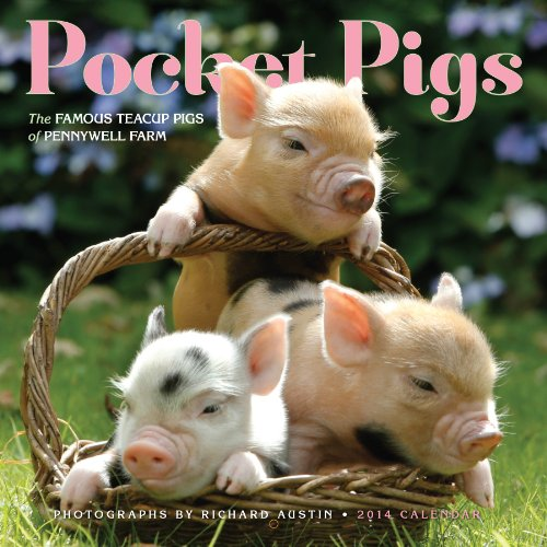 Pocket Pigs 2014 Wall Calendar: The Famous Teacup Pigs of Pennywell