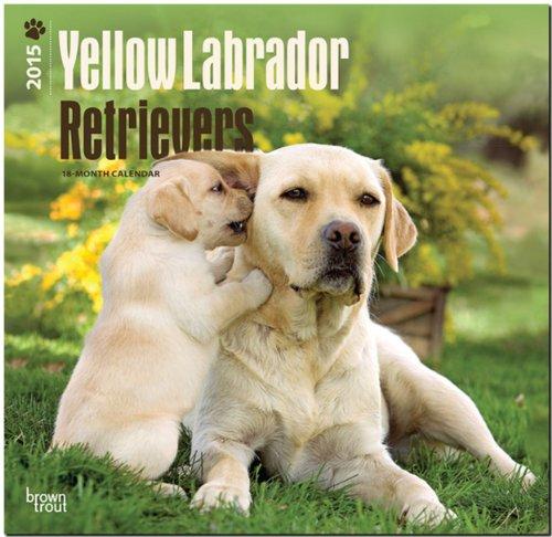 Labrador Retrievers, Yellow 2015 Square 12x12 (Multilingual Edition) (Labrador Retriever Stationery)