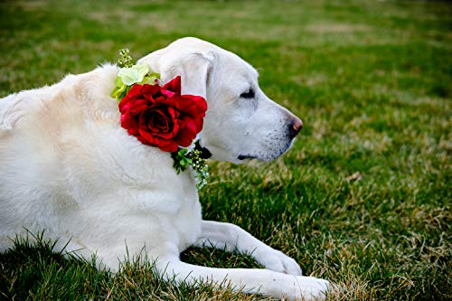 Pave Wedding Design Dog Sash Ribbon Collar with red Silk Rose & Hydrangeas