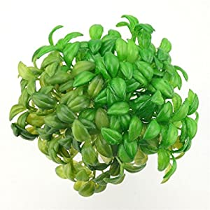 10Pcs Artificial Plastic Bean Sprouts Green Plant For Wedding Decoration Home Diy Wreath Gift Fruit And Vegetables Craft 24