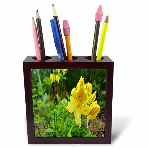 3dRose TDSwhite – Spring Seasonal Nature Photos - Springtime Yellow Blooms - 5 inch Tile Pen Holder (Bloom Pen)
