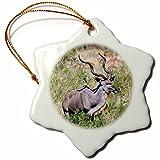3dRose orn_132082_1 Greater kudu Antelope, Kruger Park, South Africa AF42 MGL0022 Miva Stock Snowflake Porcelain Ornament, 3-Inch