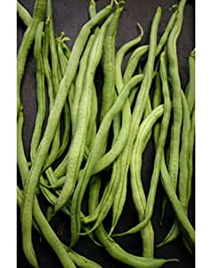 10 seeds Fortex Filet Bean (pole Bean) Vegetables, Early, dependable ! SeeDs