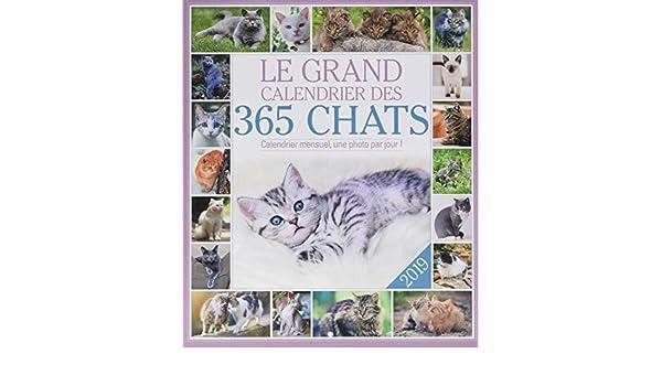 El gran calendario de los 365 gatos 2019: Collectif: Amazon.es: Oficina y papelería