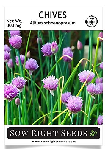 Sow Right Seeds - Chives Seed for Planting - Non-GMO Heirloom Seeds with Full Instructions for Planting an Easy to Grow Kitchen Garden, Indoor or Outdoor; Great Gift