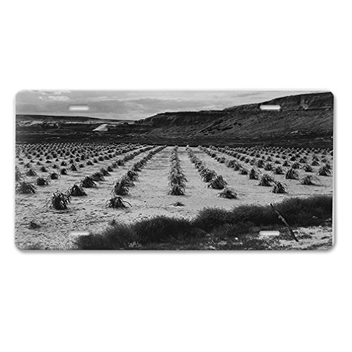 Style in Print Corn Field Tuba City Az 1941 2 (Adams) Car Aluminum License Plate Adams Field Frame