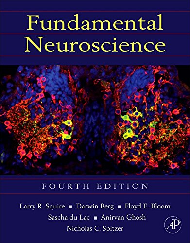 123858704 - Fundamental Neuroscience, Fourth Edition (Squire,Fundamental Neuroscience)