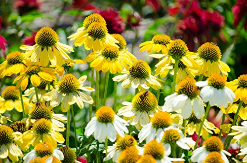 Grow Light Garden Propagator in US - 7