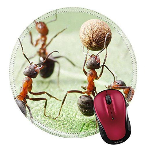Handball Dimensions Team (Liili Round Mouse Pad Natural Rubber Mousepad IMAGE ID: 14565744 team of ants plays football with pepper seed)