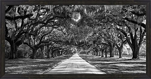 Tree Lined Plantation Entrance, South Carolina Framed Art Print Wall Picture, Espresso Brown Frame, 38 x 20 inches -