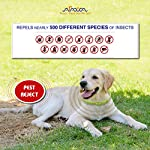 Arava Flea & Tick Prevention Collar - for Dogs & Puppies - Length-25'' - 11 Natural Active Ingredients - Safe for Babies & Pets - Safely Repels Pests - Enhanced Control & Defense - 6 Months Protection 15