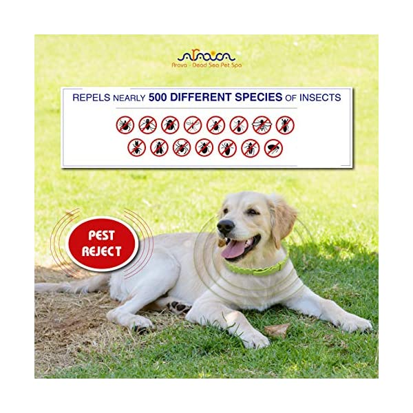Arava Flea & Tick Prevention Collar - for Dogs & Puppies - Length-25'' - 11 Natural Active Ingredients - Safe for Babies & Pets - Safely Repels Pests - Enhanced Control & Defense - 6 Months Protection 6