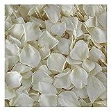Cream Ivory Rose Petals. 1100 Petals -30 cups-Preserved Freeze-dried Rose Petals. Wedding Rose Petals from Flyboy Naturals
