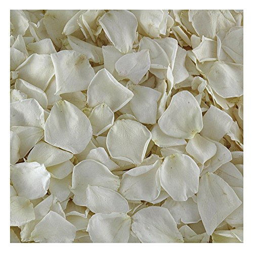 Bridal White | Ivory Rose Petals. 15 cups Preserved Freeze dried Real Rose Petals. Wedding Rose Petals from Flyboy Naturals