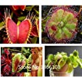 Home Garden 100 Mix Carnivore Carnivorous Pack Species Seeds Venus Flytrap Sundews Bulk Seed Pack Verieties Bonsai Flowe