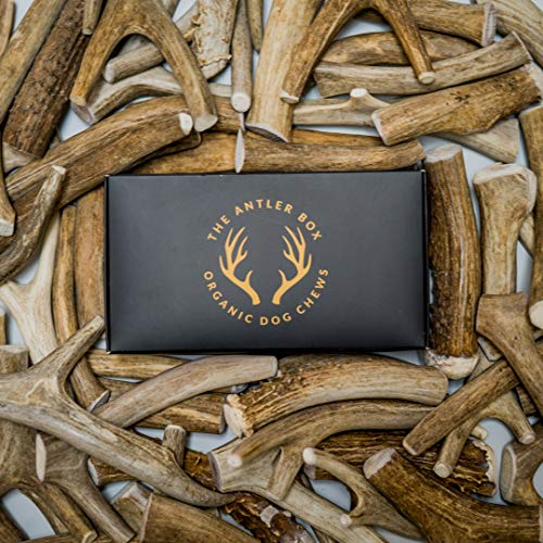 The Antler Box Premium Deer Antler Dog Chews (1 lb Bulk Pack) -Medium Large and XL Whole Antlers-Long Lasting Organic Chewing Toys Sourced from Naturally Shed Antlers in The USA ()